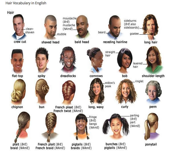Hair Vocabulary in English | Vocabulary Home