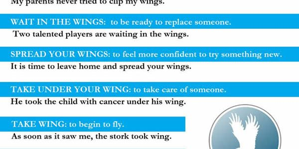 idioms-with-wing
