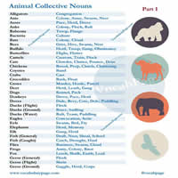animal collective nouns-200